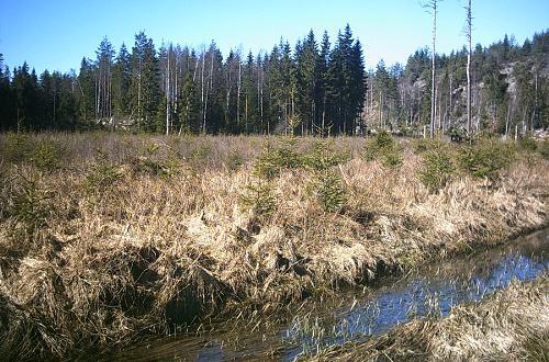 Småsumpe, tørvemoser og uigennemtrængelige granskove mellem klipperygge er karakteristisk for Kroppefjäll.