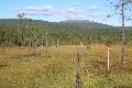 P&aring: vej mod Görälven med Fulufjället i baggrunden