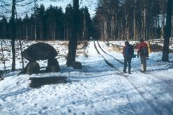 På vintervandretur ad skovvejene i  Gribskov