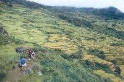 Vandring op gennem rismarkerne i  Arundalen, Nepal