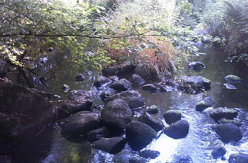Den frodige sumpskov langs Kvesarumsån.